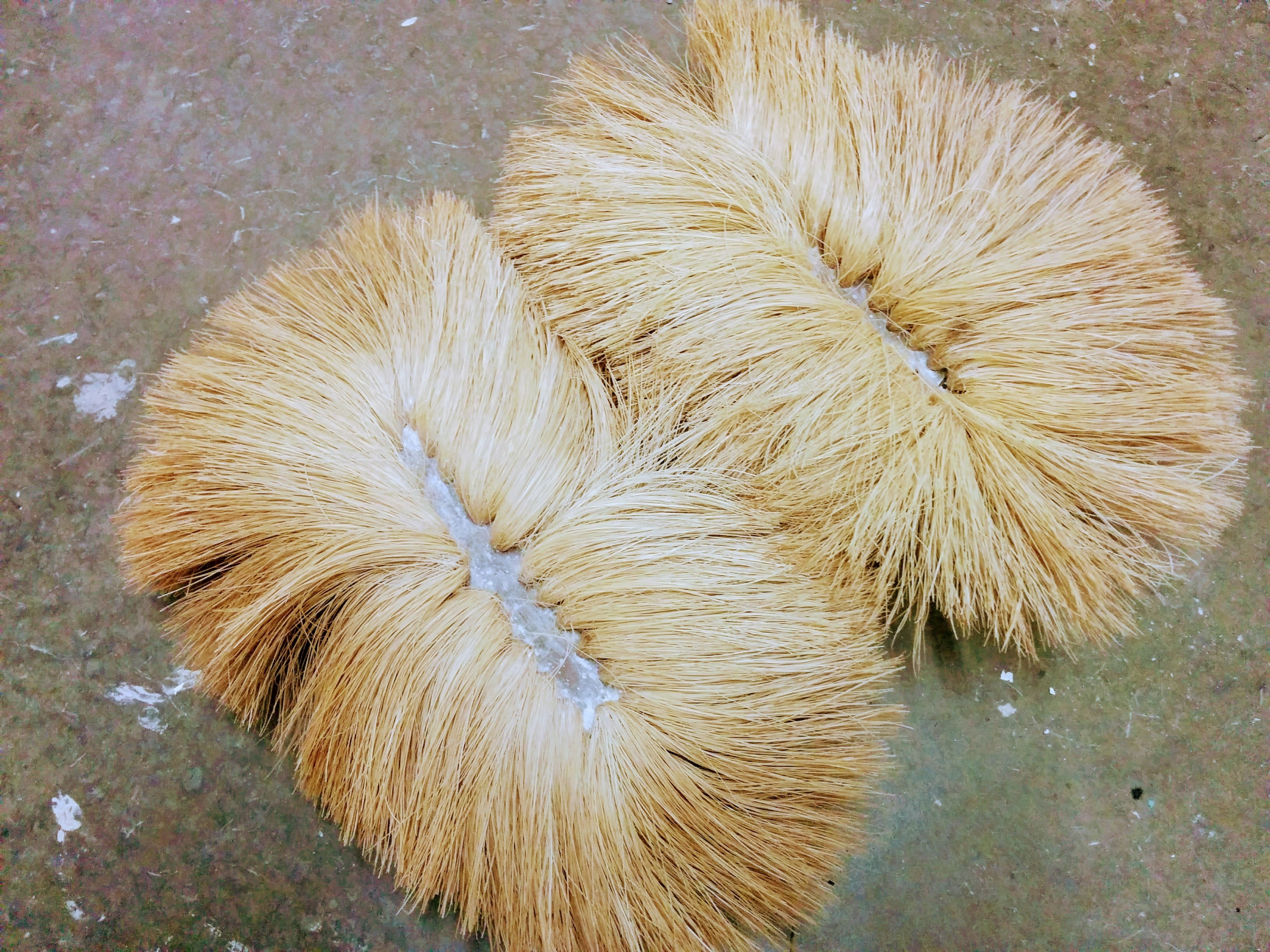 Bottom View Of A Double Crows Foot Stomp Brush Used For Drywall Texture